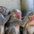 2016年の干支は猿
