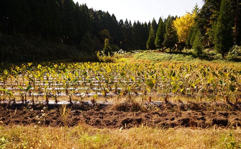 自然栽培のブログはじめました。